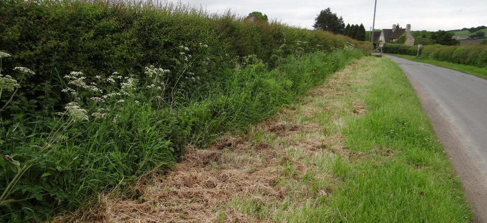 Verges After Cutting Has Taken Place