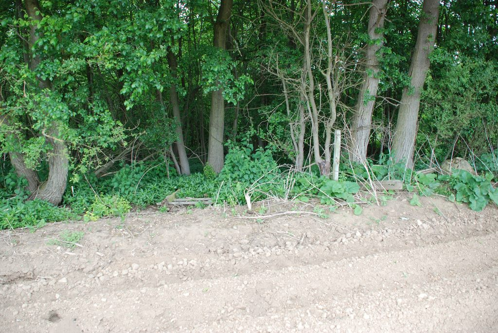 Southern boundary of Ox Close Wood along which a new hedge is to be created.