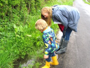 .... a close inspection of a roadside verge !