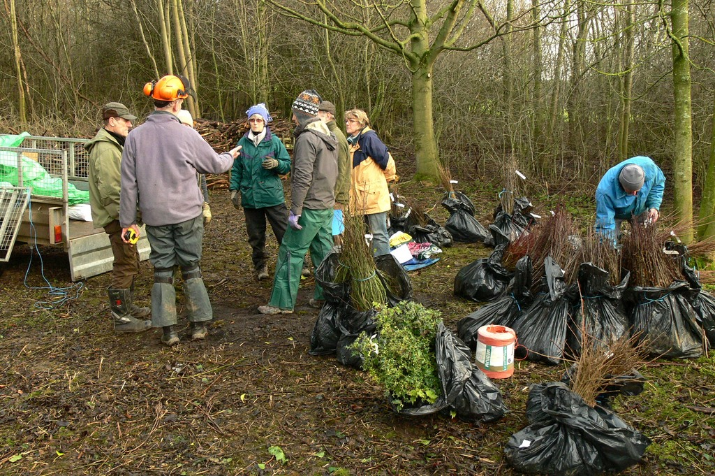 Planning the work. all the saplings are bagged into separate species and ready for dividing into lots for planting.