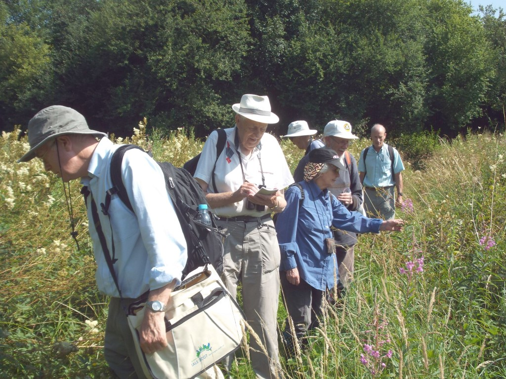 Leeds Naturalists have a guided visit to the Ellikers and Keswick Marsh.
